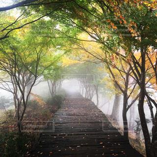 自然,風景,秋,屋外,霧,樹木,草木,日中
