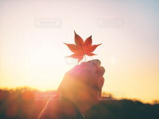 花を持っている人のぼやけた画像の写真・画像素材[873373]