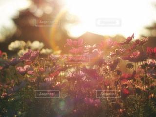 近くの花のアップの写真・画像素材[873374]