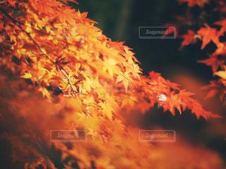 近くの木のアップの写真・画像素材[878433]