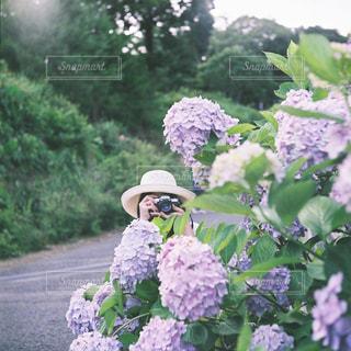 紫陽花と女の子の写真・画像素材[1270666]