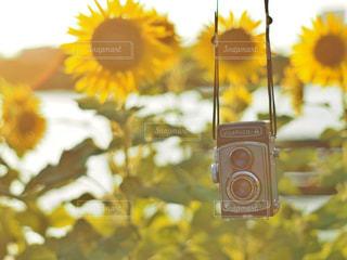 黄色の花の写真・画像素材[1270678]