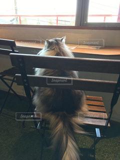 窓の前で椅子に座って猫の写真・画像素材[1271726]