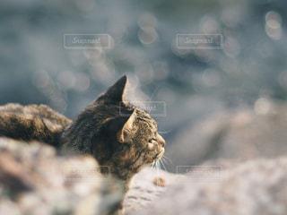 岩の上に座っている猫の写真・画像素材[1271744]