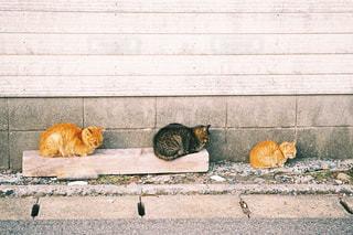 建物の上に横になっている猫の写真・画像素材[1271746]