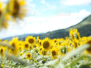 近くの花のアップの写真・画像素材[1830537]
