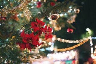近くにクリスマス ツリーのアップの写真・画像素材[1877829]