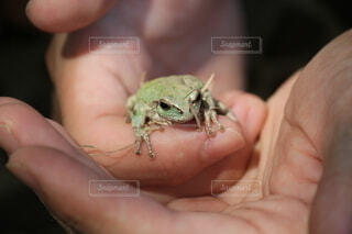 カエルを抱く手の写真・画像素材[4154206]
