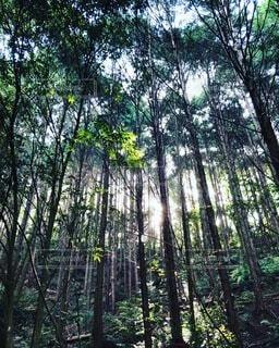 森林,木,屋外,樹木,草木