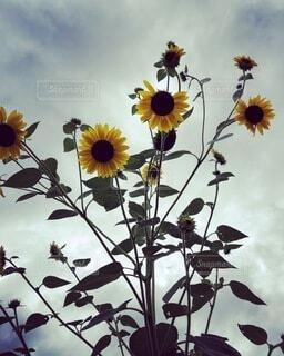 曇りの日に花瓶の写真・画像素材[4154220]