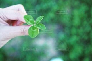 花を持つ手の写真・画像素材[4154232]