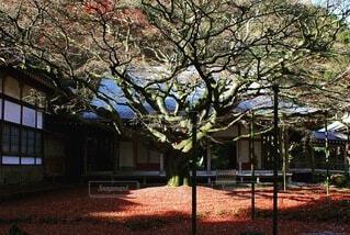 家の前の木の写真・画像素材[4154237]