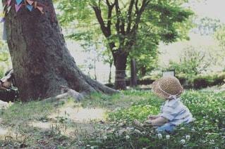 木の中に座っている少年の写真・画像素材[4154256]