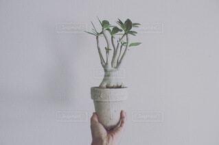 花瓶に花を持つ手の写真・画像素材[4154246]