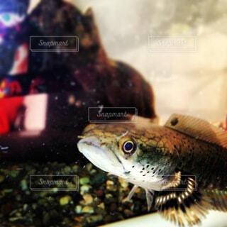魚のクローズアップの写真・画像素材[4154259]