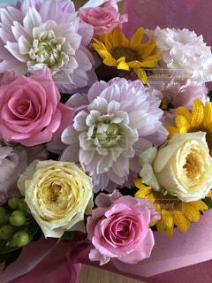 パステルカラーのお花の写真・画像素材[4169393]