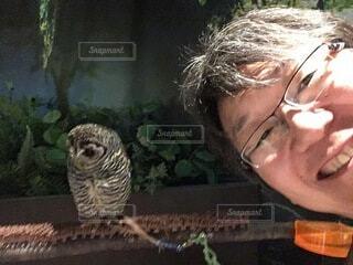 動物,鳥,人物,笑顔,フクロウ,メガネ