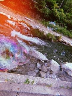 自然,魚,屋外,川,水面,葉,シャボン玉,地面,石