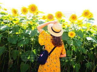 花,夏,屋外,ひまわり,黄色,人物,麦わら帽子,人