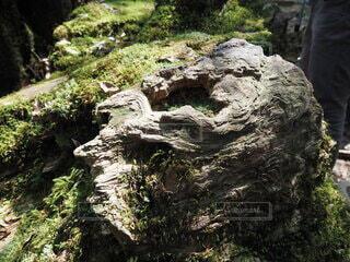 自然,屋外,山,樹木,岩