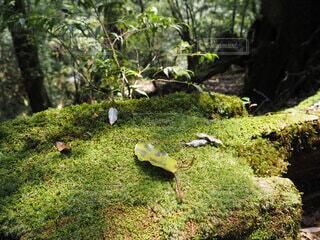 自然,動物,木,屋外,草,樹木,苔,新緑,草木,ガーデン