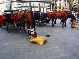 風景,乗り物,動物,屋外,馬,カート,通り,プル,引く,描画,陸上車両