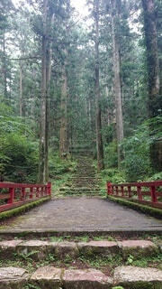 自然,建物,橋,森林,屋外,樹木,地面,ジャングル,石段,草木,鳳来寺山