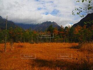 風景,空,秋,紅葉,屋外,雲,山,景色,草,樹木,上高地,バック グラウンド