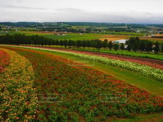 自然,風景,空,花,屋外,緑,雲,北海道,景色,草,富良野,草木