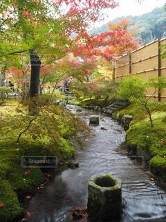秋,紅葉,屋外,水面,樹木