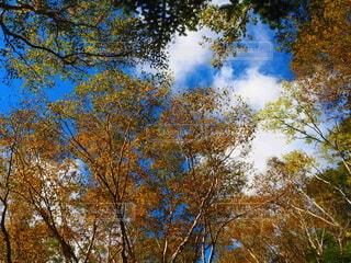 自然,空,秋,紅葉,森林,屋外,雲,葉,樹木,草木