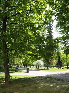 屋外,緑,白,樹木,ライトアップ,草木,色・表現,感覚・感情