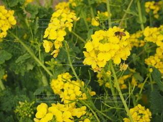 花のクローズアップの写真・画像素材[4215064]