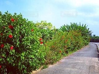 緑豊かな散歩道の写真・画像素材[4180000]