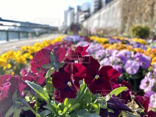 花,屋外,赤,花束,草木