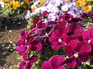 花,屋外,赤,草木,フローラ