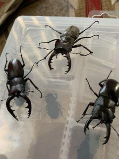 動物,アート,クモ,昆虫,クワガタ,カブトムシ,漫画