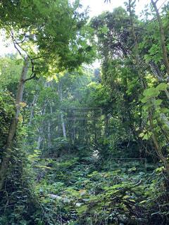 自然,森林,屋外,草,樹木,草木