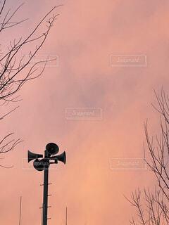 空,夕日,鳥,屋外,赤,雲,夕焼け,散歩,樹木,帰り道,景観