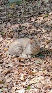 猫,動物,屋外,景色,草,地面