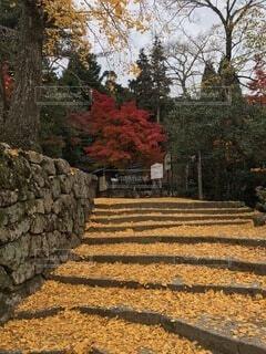 花,秋,屋外,樹木,草木,カエデ