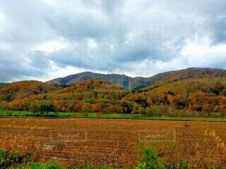 風景,空,秋,屋外,雲,山,景色,草,樹木,草木