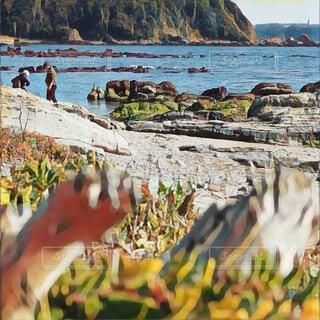 岩場のビーチ散策の写真・画像素材[4160589]