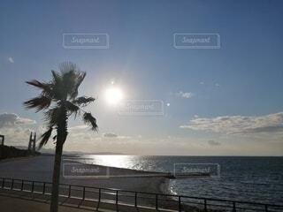海,空,太陽,景色,ヤシの木,気分転換