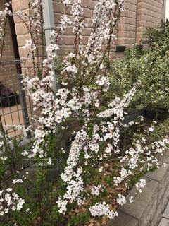 花,屋外,樹木,ガーデン