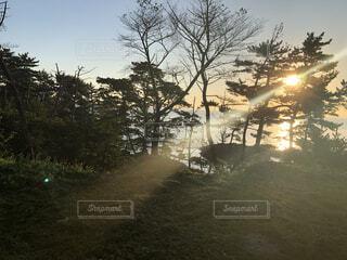 自然,風景,空,秋,屋外,湖,水面,霧,樹木,朝,草木,日中