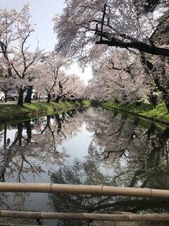 自然,空,花,屋外,湖,水面,反射,樹木,草木