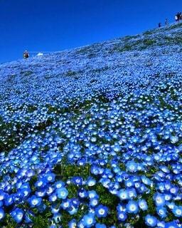 花畑を歩く人々の写真・画像素材[4168931]