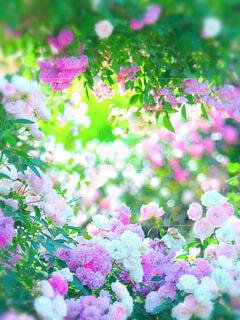 花のクローズアップの写真・画像素材[4185272]