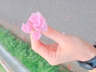 花,ピンク,手,時計,人物,人,ベルト